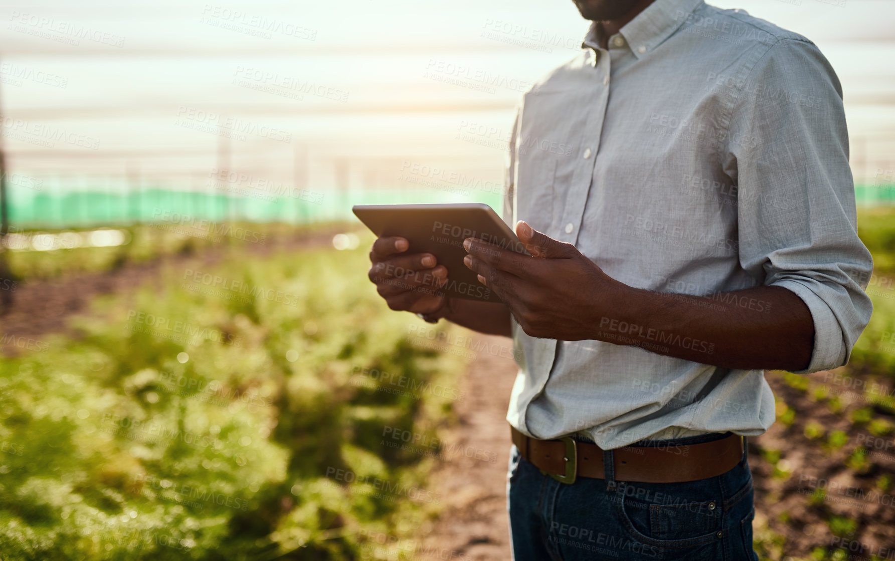 Buy stock photo Cropped shot of an unrecognizable male farmer using a tablet while working on his farm