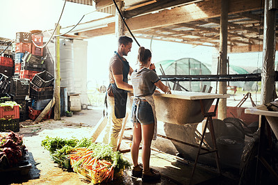 Buy stock photo Full length shot of a happy young couple cleaning and preparing a bunch of freshly picked carrots at their farm