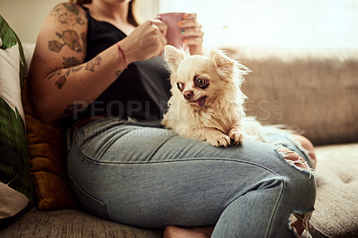 Buy stock photo Cropped shot of a woman having coffee and relaxing with her dog on the sofa at home