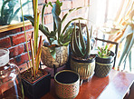 There's always room for pot plants in a home