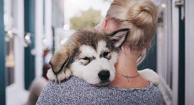 Buy stock photo Rearview shot of a young woman carrying her adorable husky puppy at home