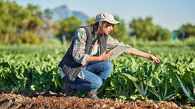 Buy stock photo Full length shot of a young female farmer using a digital tablet while inspecting crops on her farm