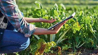 Buy stock photo Cropped shot of an unrecognizable female farmer using a digital tablet while inspecting crops on her farm