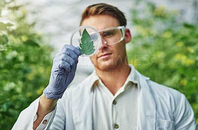 Buy stock photo Shot of a handsome young scientist examining a plant sample outdoors