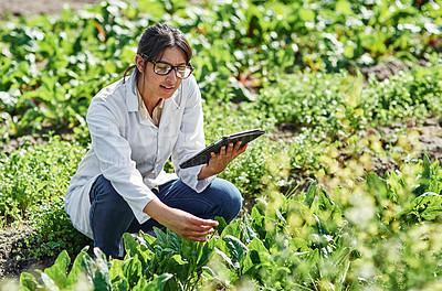 Buy stock photo Shot of an attractive young scientist using a digital tablet while studying plants and crops outdoors on a farm
