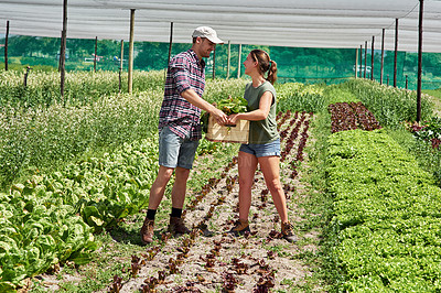 Buy stock photo Full length shot of a young couple collecting working together outdoors on a farm