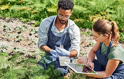 Buy stock photo Shot of two young botanists using a digital tablet while fertilizing crops and plants outdoors on a farm
