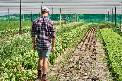 Buy stock photo Rearview shot of a farmer walking and going through the crops on his farm