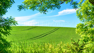 Buy stock photo Rolling Green fields and blue sky framed by trees - lots of copy space
