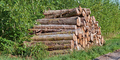 Buy stock photo A photo of a lumber pile in natural setting