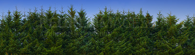 Buy stock photo A photo of a pine forest