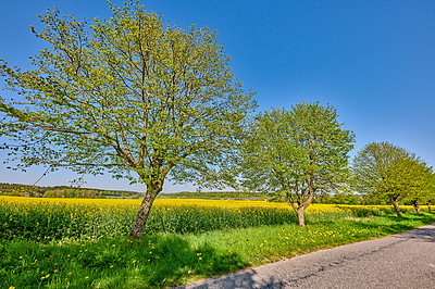 Buy stock photo A tree-lined road in the countryside in Denmark
