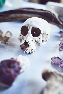 Buy stock photo Closeup of a skull placed next to different types of crystals on a table inside during the day