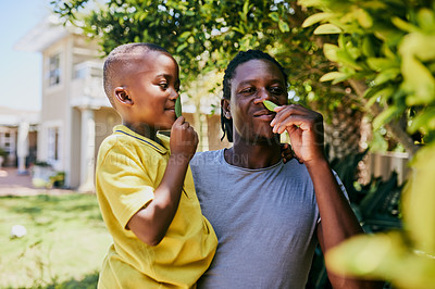 Buy stock photo Cropped shot of an affectionate young single father and his son smelling tree leaves in their backyard at home