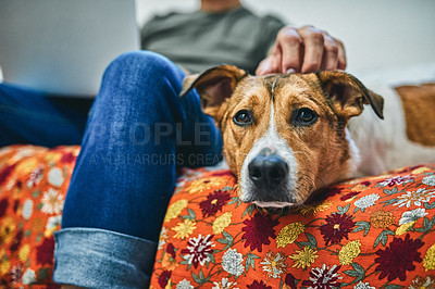 Buy stock photo Shot of an adorable little dog sitting on a couch with his owner in the background