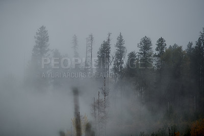 Buy stock photo Shot of fog and mist covering a forest outdoors in the East Kootaney region in British Columbia, Canada