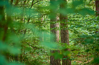Buy stock photo A very sharp and detailed photo of the famous saturated Danish forest in springtime