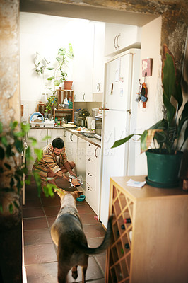 Buy stock photo Cropped shot of a cheerful young man calling his dog to eat his food inside of the kitchen during the da