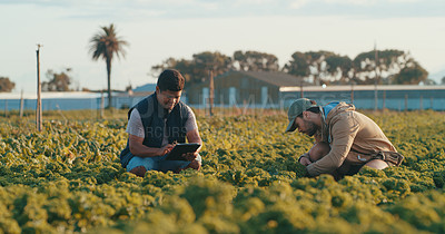 Buy stock photo Full length shot of a handsome young male farmer using a digital tablet while working with his colleague in a crop field