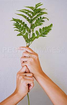 Buy stock photo Cropped studio shot of a woman holding a plant against a grey background
