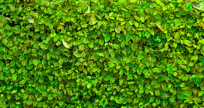 Buy stock photo Background and copy space - leaves