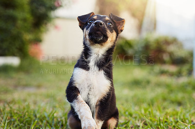Buy stock photo Shot of an adorable little puppy outside