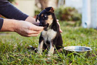 Buy stock photo Shot of an adorable little puppy getting fed by it's owner outside