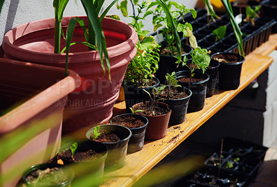 Buy stock photo Shot of plants growing in flowerpots in the backyard at home