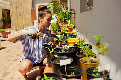 Buy stock photo Shot of a young woman gardening in her backyard at home