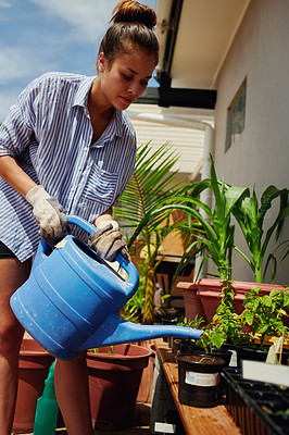 Buy stock photo Shot of a young woman watering plants in her garden at home