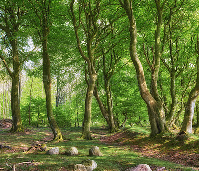 Buy stock photo A photo of the forest in springtime