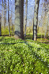 The forest in springtime
