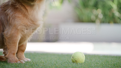 Buy stock photo Cropped shot of an unrecognizable dog playing with a ball on the grass at home