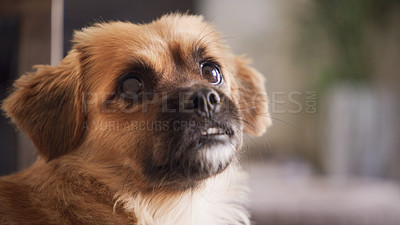 Buy stock photo Shot of an adorable little puppy