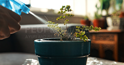 Buy stock photo Cropped shot of a woman using a spray bottle to water her plant at home