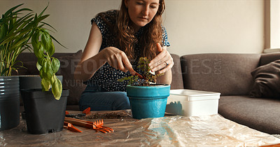 Buy stock photo Cropped shot of a young woman repotting a plant at home