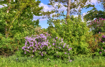 Buy stock photo Springtime images of garden, forest and landscape