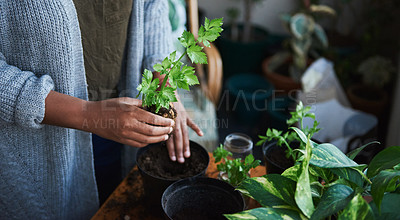 Buy stock photo Cropped shot of an unrecognisable woman gardening at home