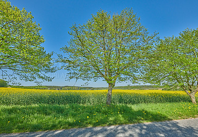 Buy stock photo Green fields and blue sky in spring and early summer