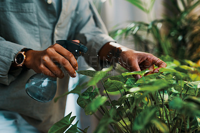 Buy stock photo Cropped shot of an unrecognizable woman watering her plants at home