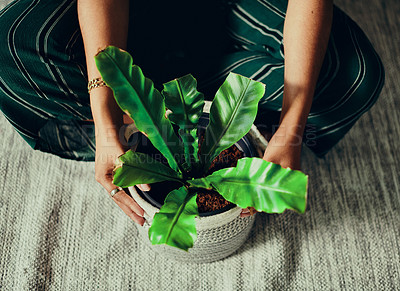 Buy stock photo Cropped shot of a woman sitting on the floor with a houseplant