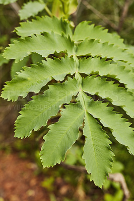 Buy stock photo Shot of green leaves growing in nature