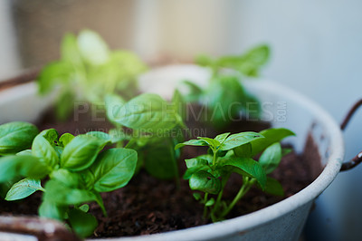 Buy stock photo Shot of a luscious green plant growing in a pot at home