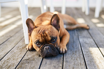 Buy stock photo Shot of an adorable dog resting outdoors