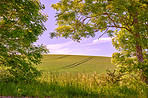 Green fields and blue sky framed by trees
