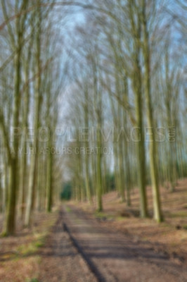 Buy stock photo The forest in autumn and winter - colorful