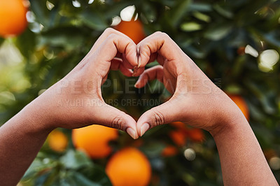 Buy stock photo Cropped shot of an unrecognizable woman making a heart shape with her hands in front of an orange tree