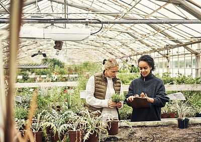 Buy stock photo Shot of two young women working in a greenhouse