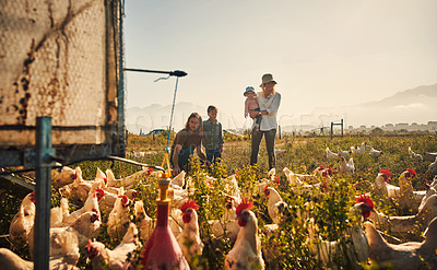 Buy stock photo Shot of a family looking at the chickens on their farm