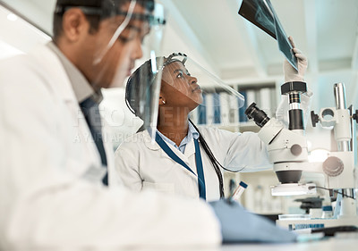 Buy stock photo Shot of a young scientist analysing x-rays while working alongside a colleague in a lab